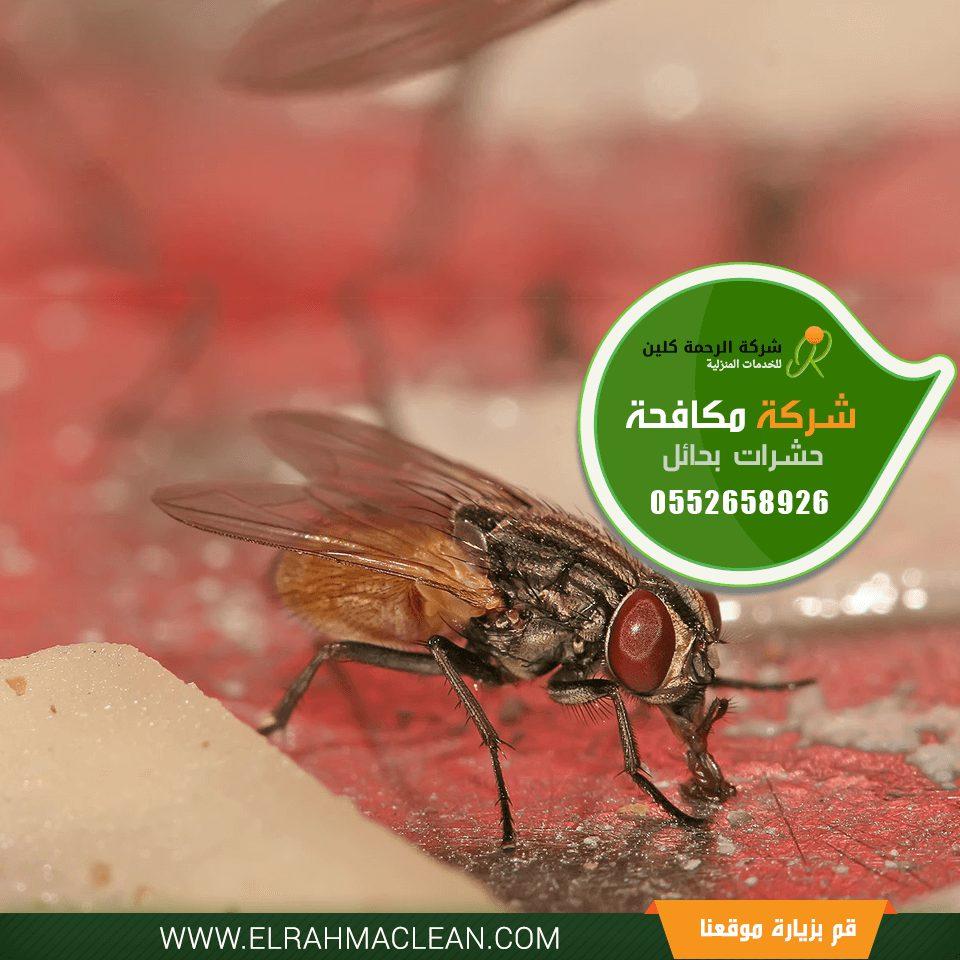 شركة مكافحة حشرات بحائل - رش مبيدات بحائل