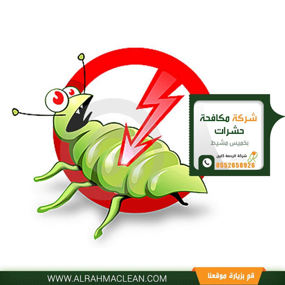 شركة مكافحة حشرات بخميس مشيط -شركة رش مبيدات بخميس مشيط