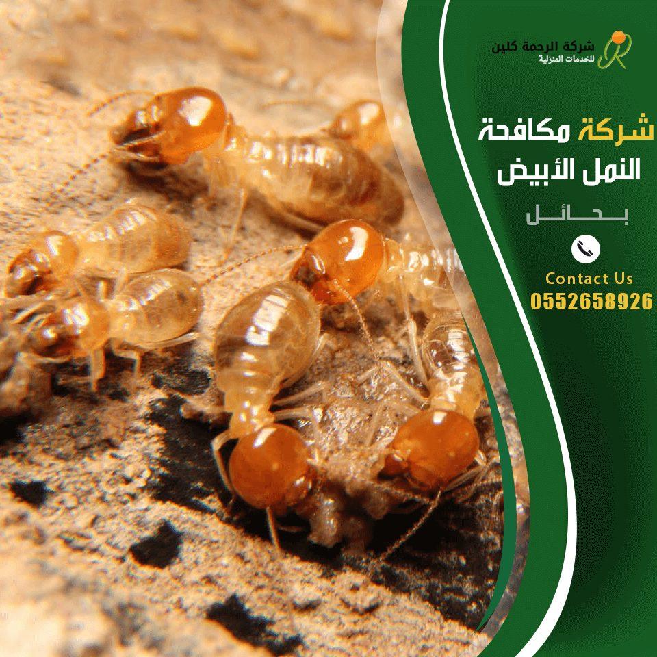 شركة مكافحة النمل الابيض بحائل - شركة رش مبيدات بحائل