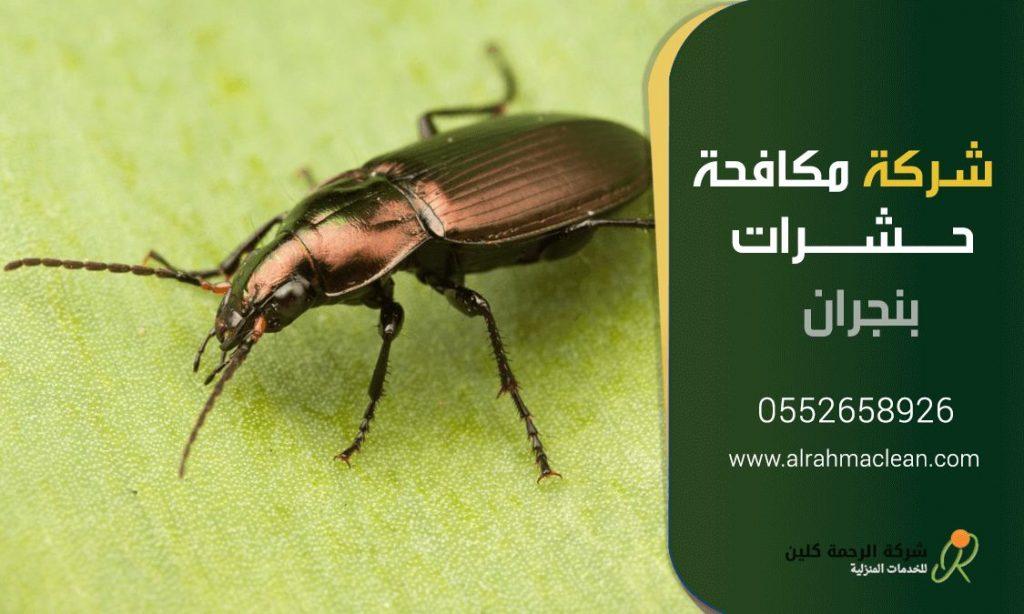 شركة مكافحة حشرات بنجران - رش مبيدات بنجران