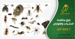 طرق مكافحة الحشرات والقوارض - شركة مكافحة حشرات بحائل