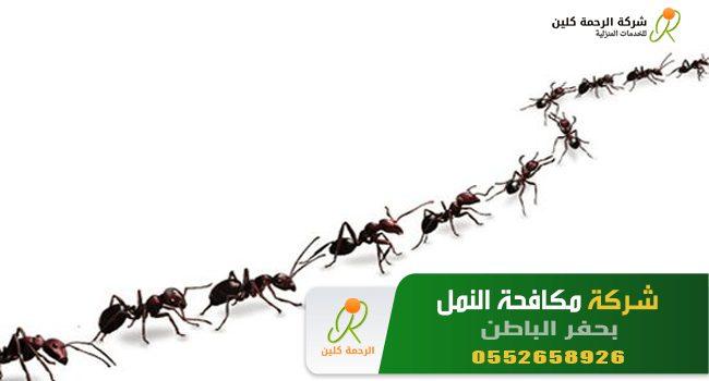 شركة مكافحة النمل بحفر الباطن