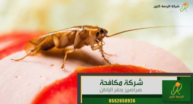 شركة مكافحة صراصير بحفر الباطن