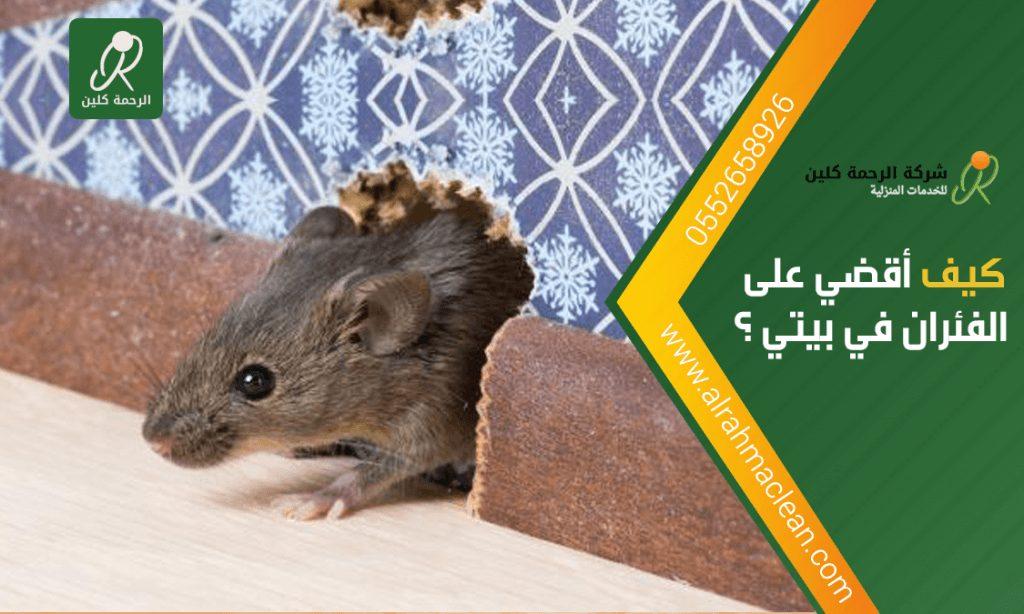 كيف أقضي على الفئران في بيتي
