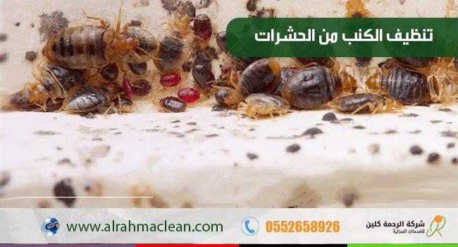 طريقة تنظيف الكنب من الحشرات