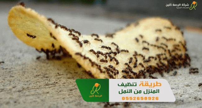 طريقة تنظيف المنزل من النمل