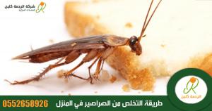 الصراصير .. معلومات مدهشة قد لا تعرفها عنها وطريقة التخلص منها بسهولة