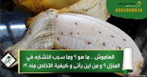 التخلص من الهاموش ( ذباب الفاكهة الصغير ) نهائيا من المطبخ والمنزل بطرق طبيعية