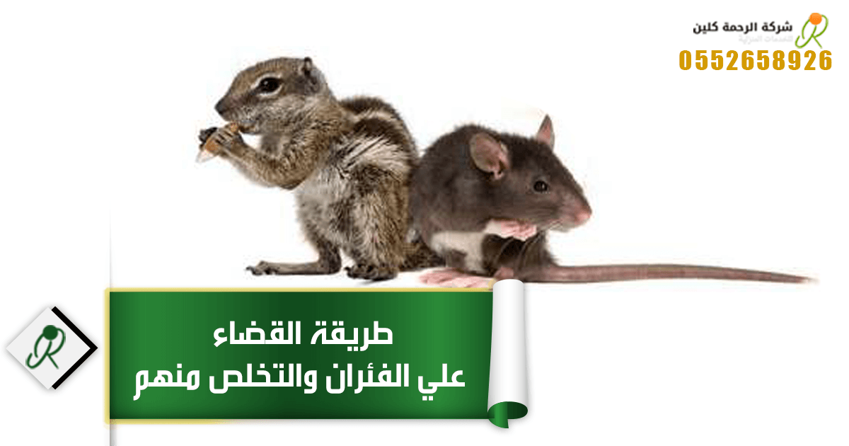 القضاء علي الفئران وطريقة التخلص منهم وما الذي يكرهه الفئران ؟