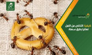 كيفية التخلص من النمل نهائيا .. علاج النمل نهائيا من المنزل