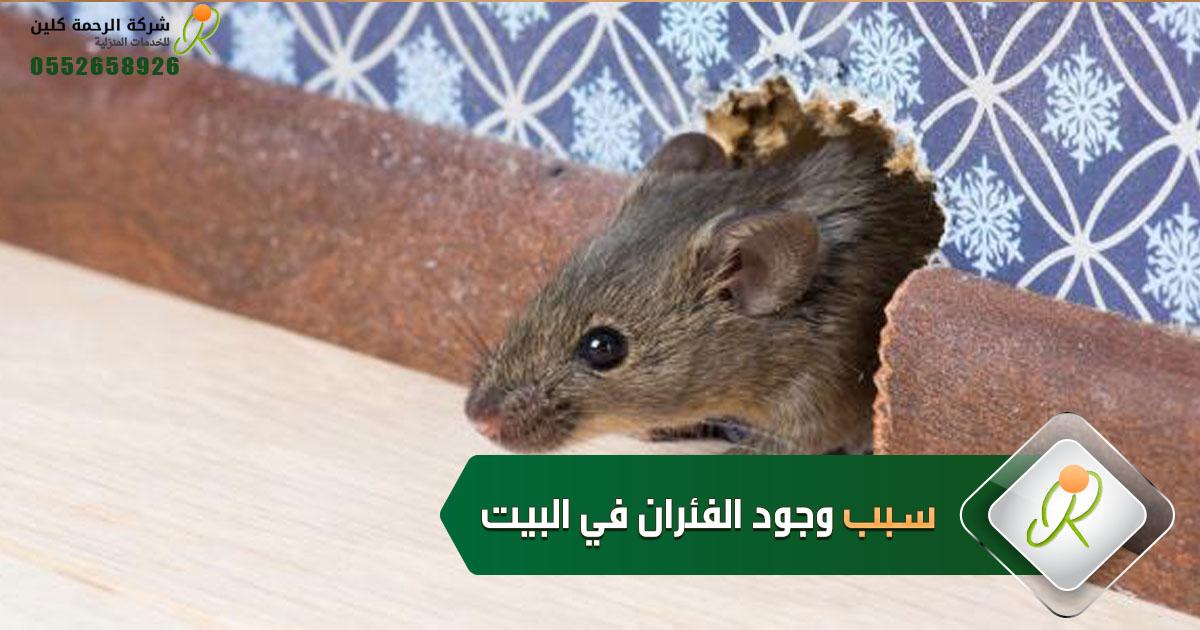 سبب وجود الفئران في البيت